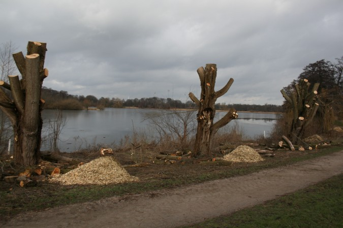 Utterslev mose træfældning 1