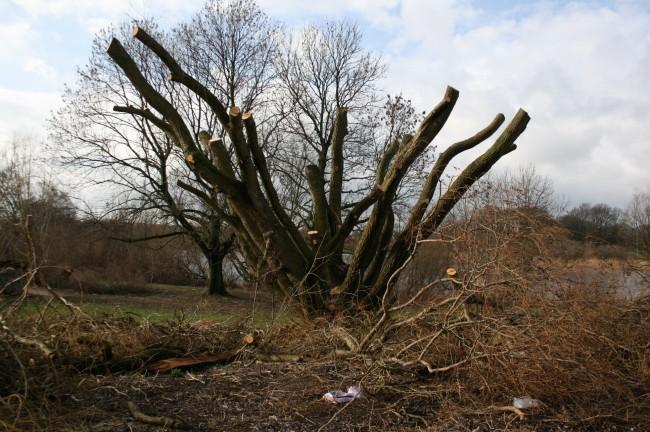 Utterslev træer 2